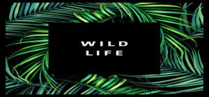 kevin hunter wild life